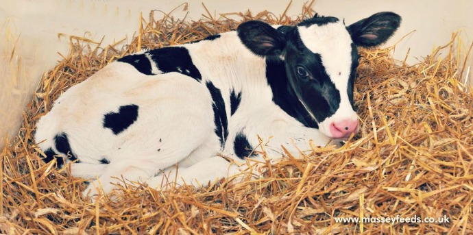 Don't cut corners with colostrum