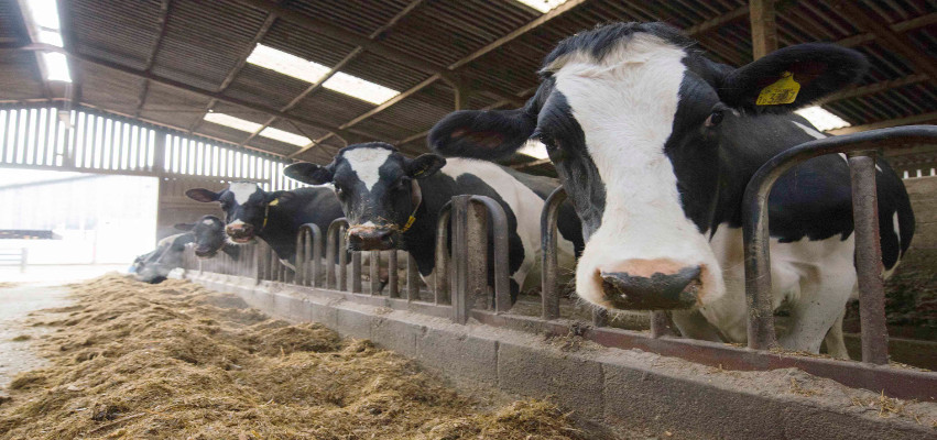 Agricultural Feeds Supplier | Farm Services | Massey Feeds